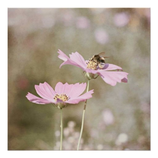 Bee on Pink Flower Posters
