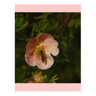 Bee on Potentilla Postcard