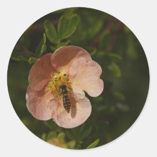 Bee on Potentilla Round Sticker