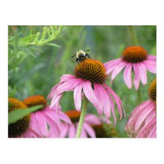 Bee on Purple Coneflower Postcard
