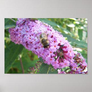 Bee On Purple Flower Posters