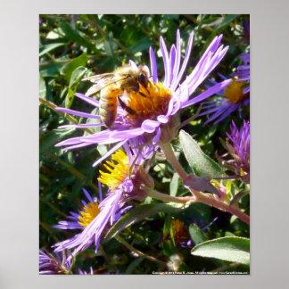 Bee on Purple Flower - Print
