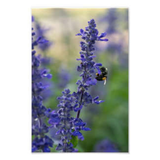 BEE ON SALVIA IN McKENNAN PARK by Michelle Diehl Photographic Print