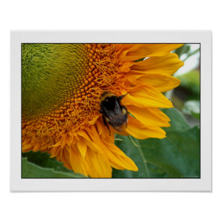 Bee on sunflower I Poster