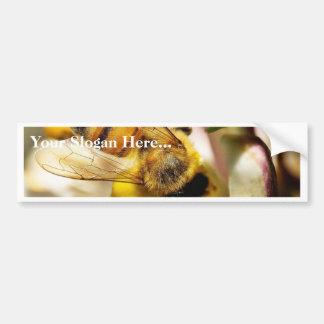 Bee On The Meyer Lemon Tree In My Balcony Car Bumper Sticker