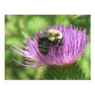 Bee On Thistle Postcard