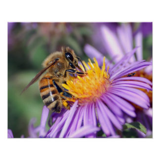 Bee on Yellow & Purple Flower Poster