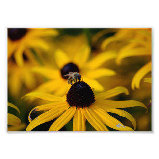 Bee Photo Print