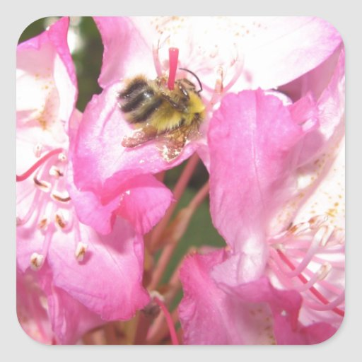 Bee pink flowers and lady bug items square sticker