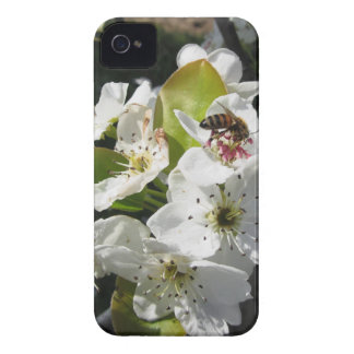 Bee pollinates a pear blossom in spring iPhone 4 cases
