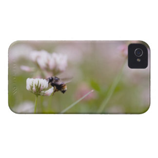 Bee Pollinating Clover Case-Mate iPhone 4 Cases