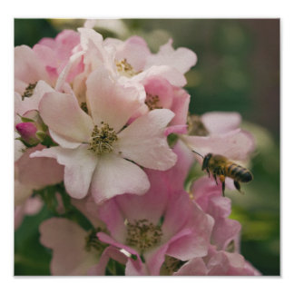 Bee Pollinating Pink Flower Posters