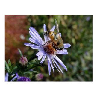 Bee Poscard Postcard