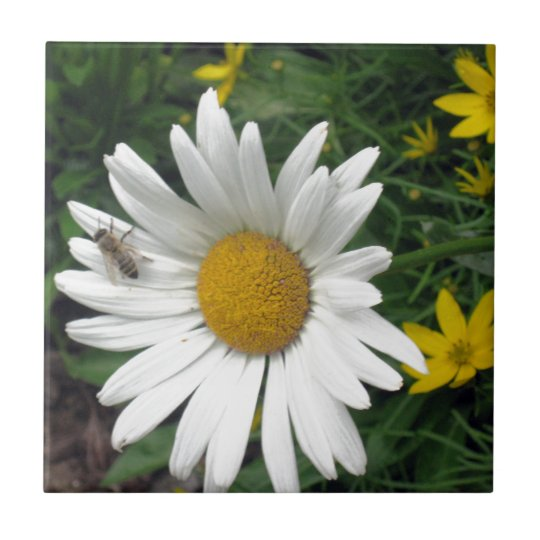 Bee Resting on shasta Daisy Small Square Tile