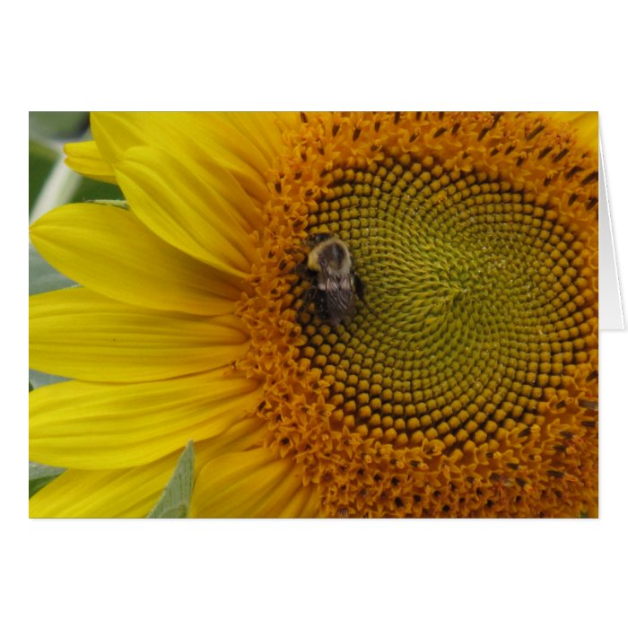 Bee Settling In Greeting Card