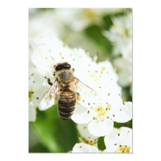 Bee sitting on a spring flower card
