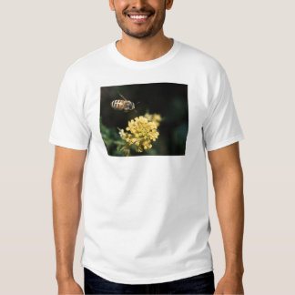 bee t shirts