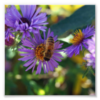 Bee-u-t-ful Photograph