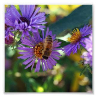Bee-u-t-ful Photo Print