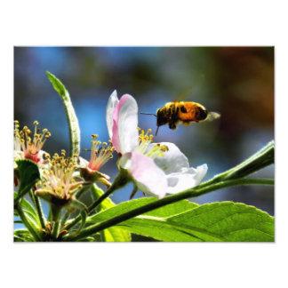 Bee & White Flower Photography Art Photo