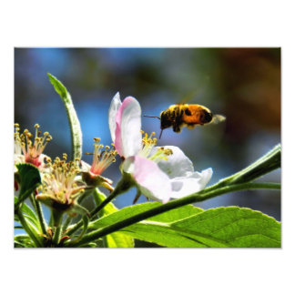 Bee & White Flower Photography Photo Print