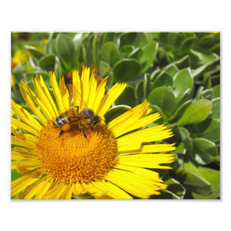 Bee Worker on Flower Garden Photo Print