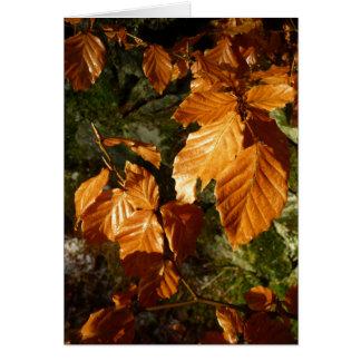 beech leaves card