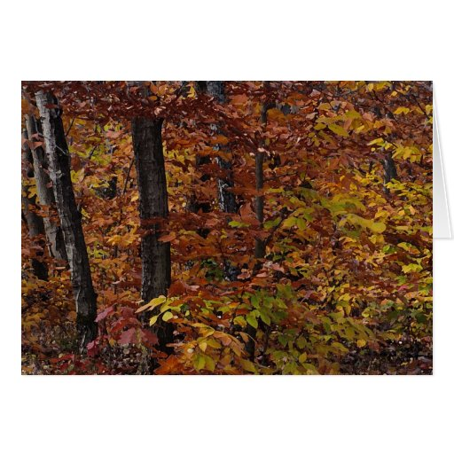 Beech Tree Forest Birthday Cards