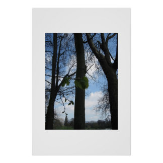 Beech trees poster