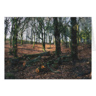 Beech Woodland Card