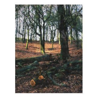 Beech Woodland Postcard