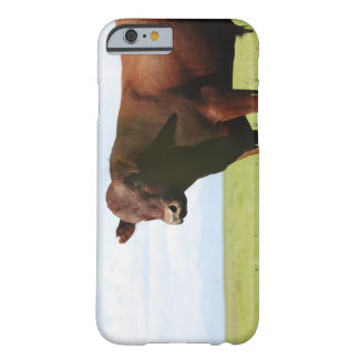 Beef cow in field barely there iPhone 6 case