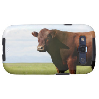 Beef cow in field galaxy SIII cases