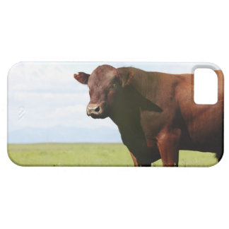 Beef cow in field iPhone 5 covers