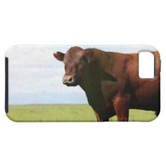 Beef cow in field case for the iPhone 5