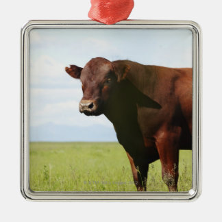 Beef cow in field christmas ornament