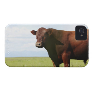Beef cow in field iPhone 4 Case-Mate case