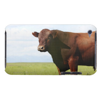 Beef cow in field iPod touch case