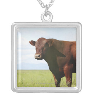 Beef cow in field silver plated necklace