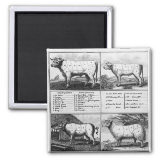 Beef, Veal, Pork, and Mutton Cuts, 1802 Square Magnet