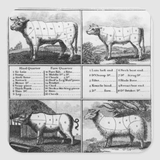 Beef, Veal, Pork, and Mutton Cuts, 1802 Square Sticker