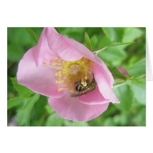 Beefly in Rose Note Card