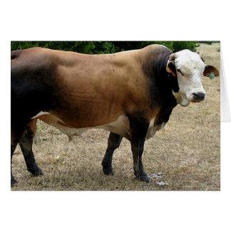 Beefmaster Bull Cattle Portrait Blank Card