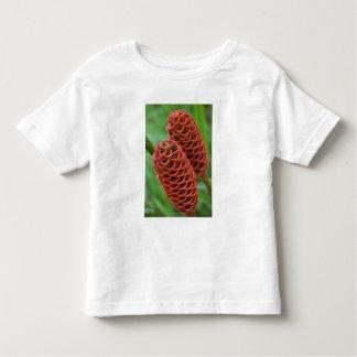 Beehive Ginger, Zingiber spectabile), Toddler T-Shirt