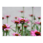 Bees and Echinacea Postcard