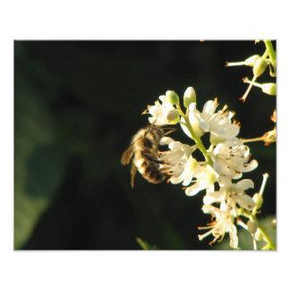 Bee's Eye View 8x10 photo