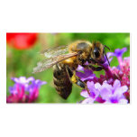 Bees for Sale Pack Of Standard Business Cards