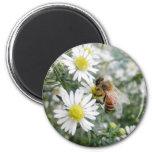 Bees Honey Bee Wildflowers Flowers Daisies Photo 6 Cm Round Magnet