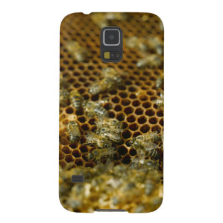Bees In Hive, Western Cape, South Africa Case For Galaxy S5