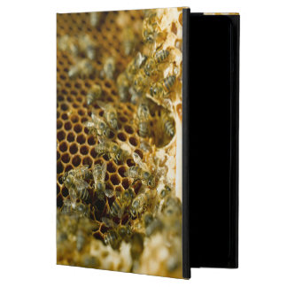 Bees In Hive, Western Cape, South Africa iPad Air Cover